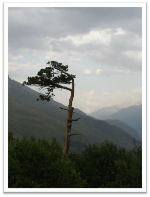 Одинокое дерево на Кавказе