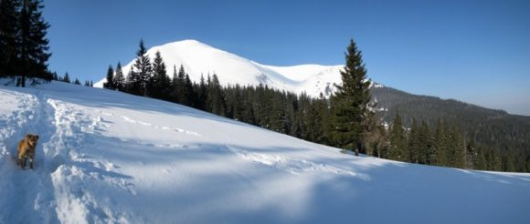 Карпаты 2012